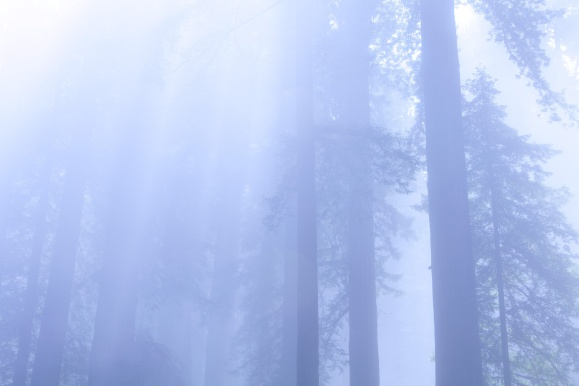 UNUSED-REDWOODS-BLUE